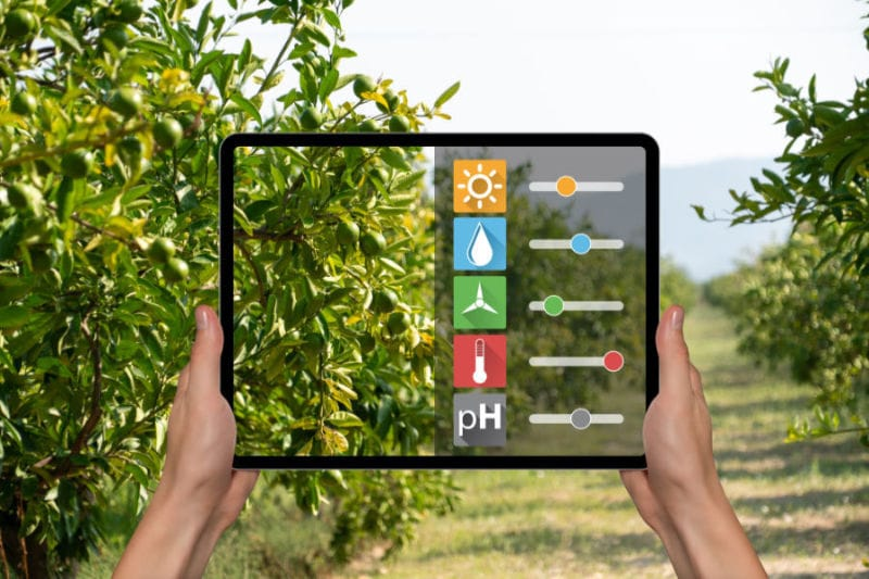 Farmer Checking Weather with a Tablet